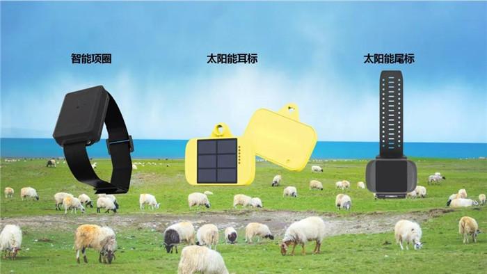 """几米智慧牧场IoT解决方案,将""""智慧放牧,高效养殖""""带进牧场"""