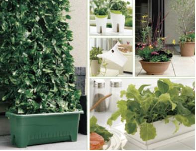 桌子上放着一些绿色植物  描述已自动生成