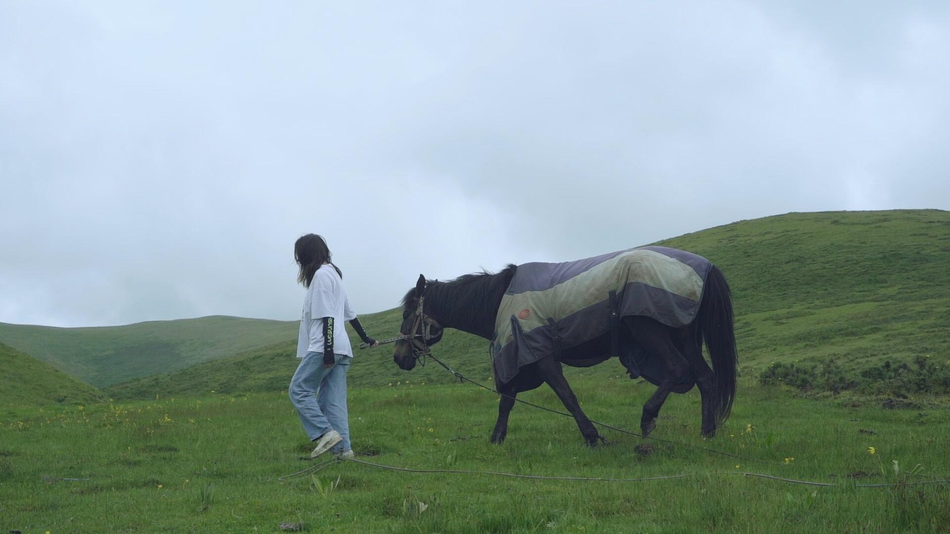 图片包含 草, 户外, 牛, 田地描述已自动生成
