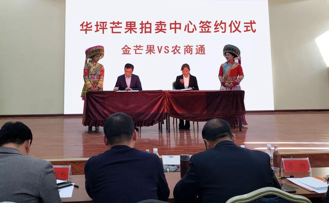 华坪芒果拍卖中心签约仪式取得取得成功举行!