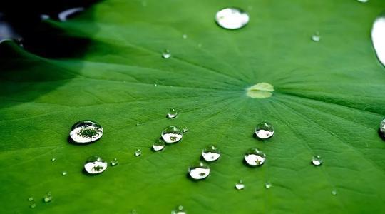 湿气重会致癌得慢病?3款粥方助祛夏季湿热