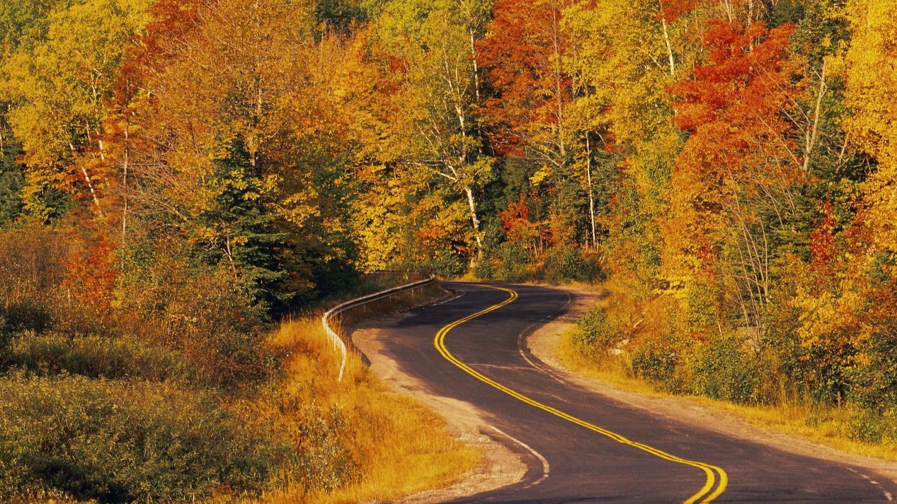 黄色枫叶蜿蜒道路照片电脑桌面